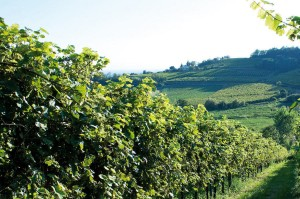 Ca'D'or Noble Italian Wine